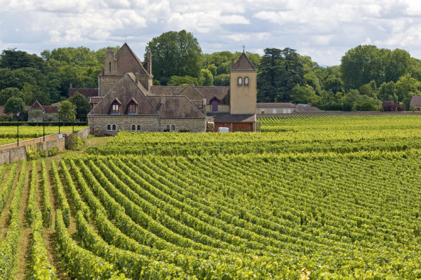 Grape fields and Chateau